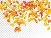 Oak, Maple, Wild Ash Rowan Leaves Vector, Autumn Foliage On Transparent Background. Red Gold Yellow  poster