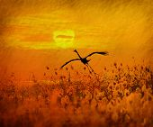 stock photo of water bird  - bulrushes against sunlight over sky background in sunset with a flighting bird - JPG
