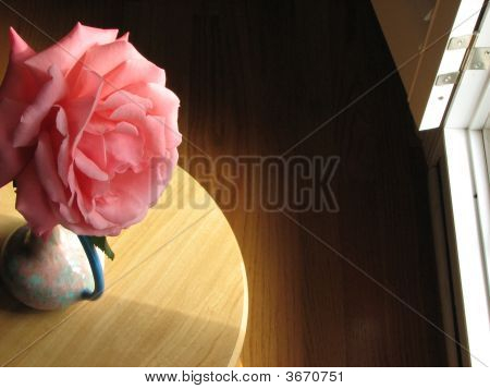 Large Pink Camellia