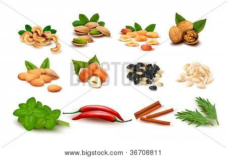 Big set of ripe nuts and seeds and spices. Vector.