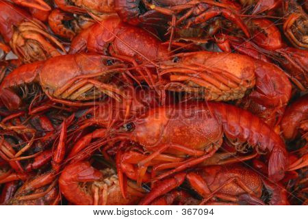 Boiled Crawfish Closeup