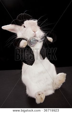 Photo of cute rabbit dancing in top hat  and tuxedo. Isolated on dark background