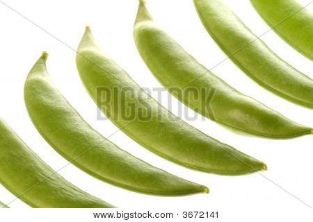 Snow Peas Macro