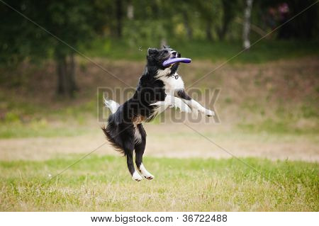Frisbee dog catching disc