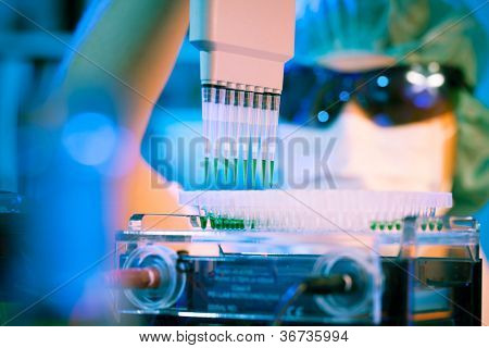 Girl in the microbiology laboratory takes samples multi pipette