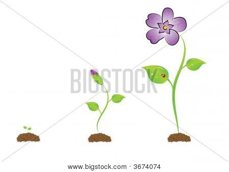 The Isolated Sprout With A Violet