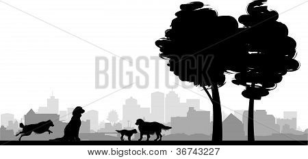 four dogs on a grass background