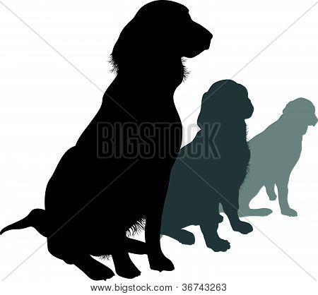 dogs in a line