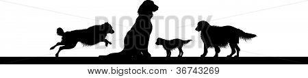 perros en línea