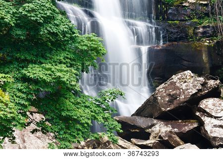 Beautiful Waterfall And Green Maple Tree