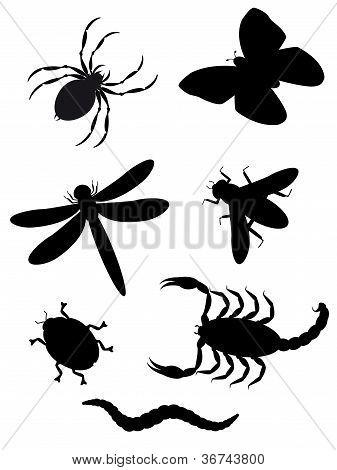 Käfer und Insekten silhouette
