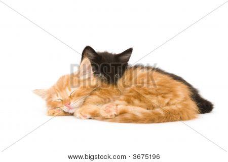 Two Kittens Sleeping