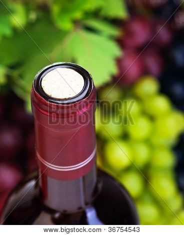 Image of wine bottle with cork on grapes background, luxury alcoholic grape beverage, selective focus  of different vine kinds, restaurant outdoor, organic food, tasty sweet fruit, wine making