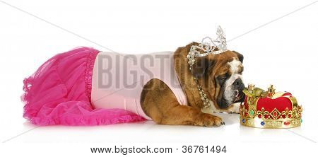 princess kissing a frog hoping for a prince - bulldog kissing a real toad wearing a crown