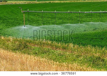 Watering A Crop
