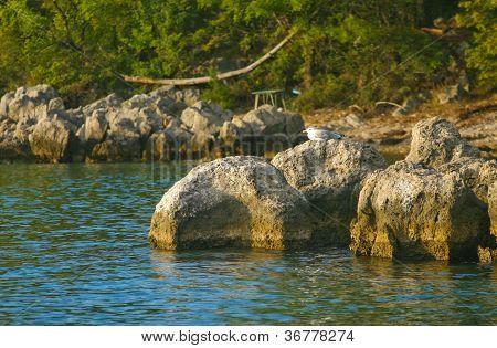 Sashore On The Island Cres