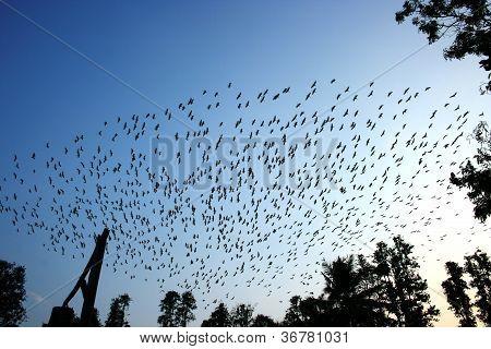 Cranes and pelicanes