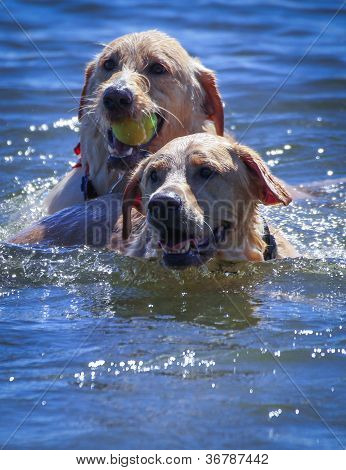 Dogs' Play Time at the Lake