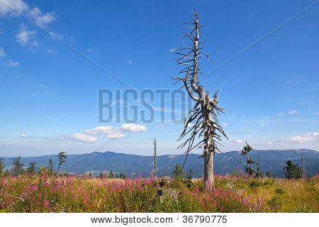 A Dead Tree In The Mountains