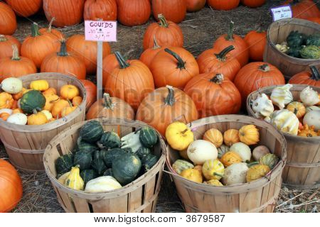 Baskets Of Squash And Gourds, Pumpkins Too