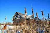 image of bulrushes  - bulrush near wooden rural building - JPG