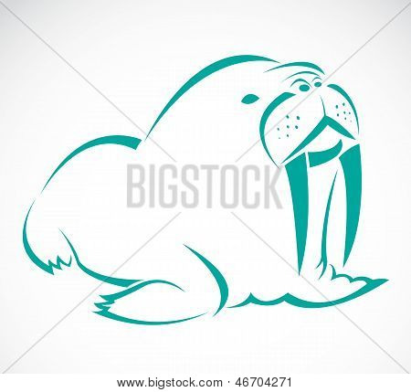Vector image of an sea lion