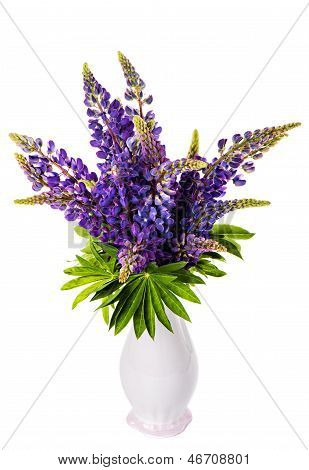 Beautiful Lupine Bouquet In Vase