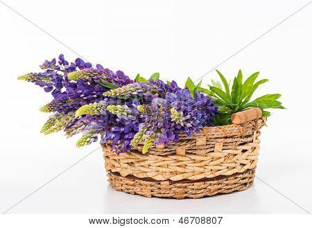 Beautiful Lupine Bouquet In Basket
