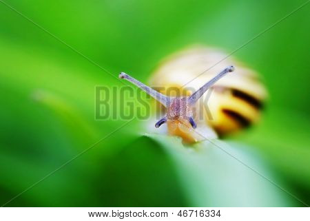 Small brown snail on a green leaf.