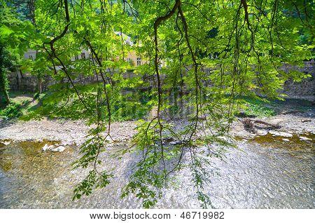 Tree leaves against river