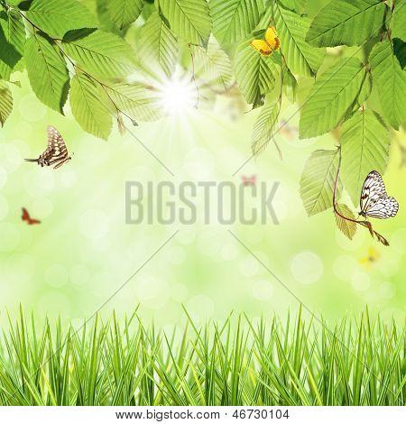 Green hornbeam leaves with butterflies