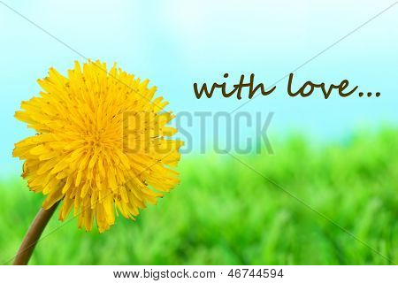 Dandelion flower on grass on bright background
