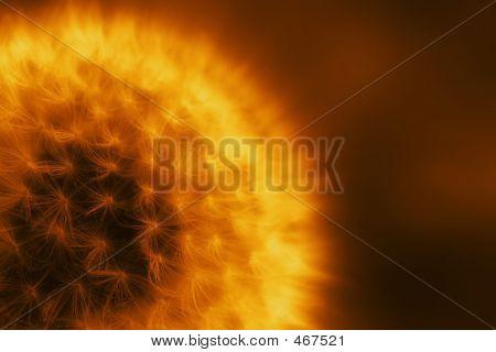 Stellar Dandelion
