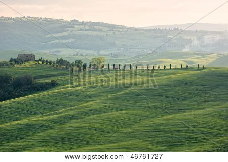 Farmhouse with cypess alley and fields, Tuscany, Italy