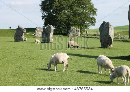 Avebury standing stones and sheep