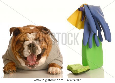 Bulldog Laughing At Mess He Made