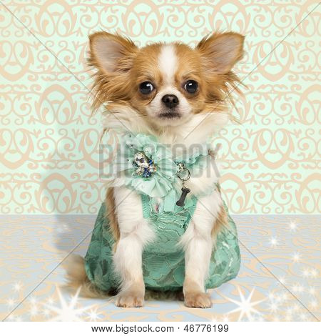 Chihuahua wearing a green dress, sitting on fancy background