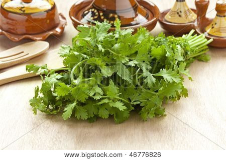 Fresh bunch of coriander on the table