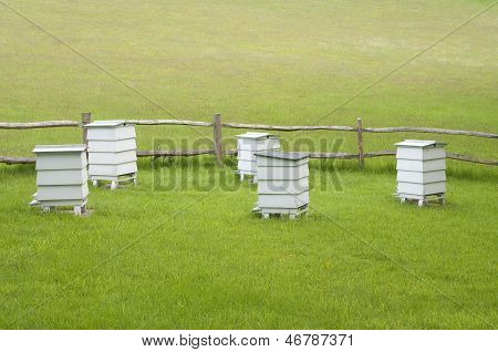 Hives In Green Meadow