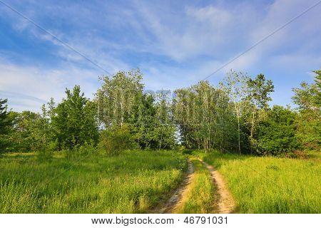 Rut road across forest meadow