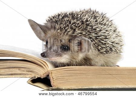 cute hedgehogs read book