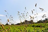 foto of wild-brier  - rural landscape in Brittany in summer day - JPG