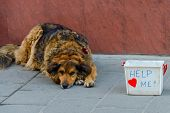 picture of begging dog  - Dirty Sad Dog Begging on Street of urban city - JPG