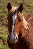 Portrait Horse poster