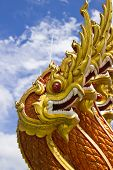 stock photo of snake-head  - PHUKET - JPG
