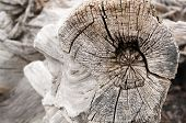 image of driftwood  - Detail of weathered driftwood found on the Chilean coast in Patagonia - JPG