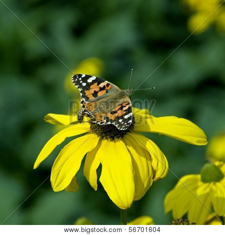 flower, butterfly and worker bee.