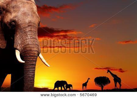 Concepto de naturaleza africana