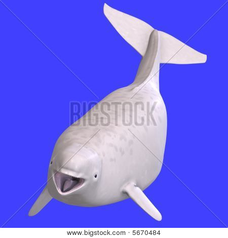 Whitle Juvenilie Beluga Whale