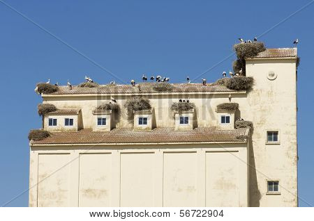 storks in a industrial building